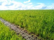 Campo con erba e cieli blu fertili Fotografia Stock
