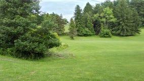 Campo con erba e gli alberi fotografia stock libera da diritti