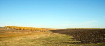 Campo con erba falciata Fotografie Stock