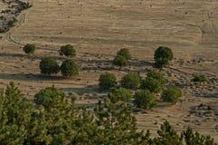 Campo con gli alberi in valle Fotografia Stock