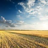 Campo con grano dorato nel tramonto Immagine Stock