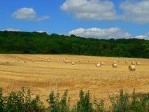Campo con grano raccolto in balle Immagine Stock