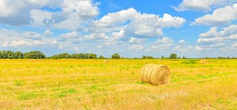 Campo con haystakcs en tiempo soleado fotos de archivo