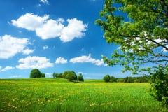 Campo con i denti di leone ed il cielo blu Fotografia Stock Libera da Diritti