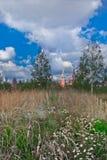 Campo con i fiori ed il Cremlino di Mosca Immagini Stock