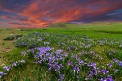 Campo con i fiori in valle della montagna Paesaggio di estate durante il tramonto Immagini Stock Libere da Diritti