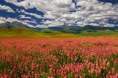 Campo con i fiori in valle della montagna Paesaggio di estate durante il tramonto Immagine Stock Libera da Diritti
