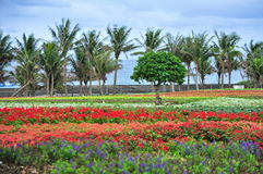 Campo con i fiori variopinti Fotografia Stock Libera da Diritti