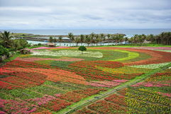 Campo con i fiori variopinti piantati Fotografia Stock Libera da Diritti