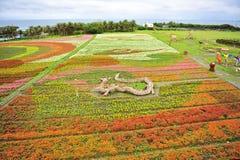 Campo con i fiori variopinti piantati Immagine Stock