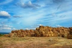 Campo con i mucchi di fieno Fotografia Stock
