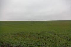 Campo con i raccolti di inverno al giorno nebbioso Fotografia Stock Libera da Diritti