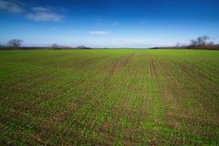 Campo con i tiri verdi dei raccolti di inverno Fotografia Stock Libera da Diritti