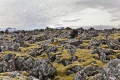 Campo con il vulcano di Snæfellsjökul alla parte posteriore. Immagini Stock Libere da Diritti