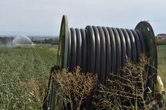 Campo con irrigazione corrente, primo piano del cotone di solut tecnico Immagini Stock Libere da Diritti