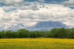 Campo con l'aroma del miele, Kamchatka immagine stock