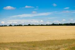 Campo con la cosecha Foto de archivo libre de regalías