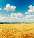 Campo con la cosecha de oro y el cielo nublado Imagen de archivo