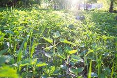 Campo con la hierba verde fresca Imagen de archivo libre de regalías