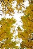 Campo con la noce Autumn Landscape fotografia stock