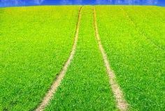 Campo con la traccia del trattore Fotografia Stock