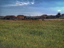 Campo con las amapolas Imagenes de archivo