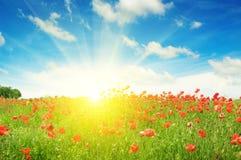 Campo con las amapolas y el sol Fotografía de archivo