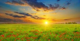 Campo con las amapolas y la salida del sol Imagen de archivo libre de regalías