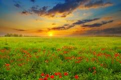 Campo con las amapolas y la salida del sol Fotos de archivo libres de regalías