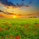 Campo con las amapolas y la salida del sol Fotografía de archivo