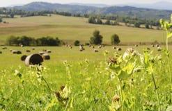 Campo con las balas redondas de heno contra la perspectiva de las montañas 2 fotos de archivo