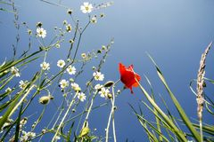Campo con las flores Fotos de archivo libres de regalías