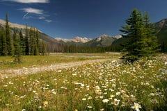 Campo con las flores fotografía de archivo