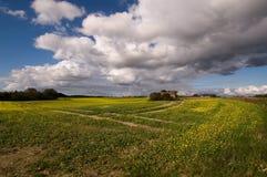 Campo con las flores amarillas Fotos de archivo libres de regalías