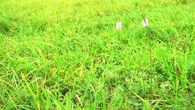 Campo con las flores en un viento Flores salvajes azules hermosas metrajes
