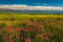 Campo con las flores en valle de la montaña Paisaje del verano durante puesta del sol Imágenes de archivo libres de regalías