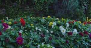 Campo con las flores salvajes florecientes coloridas de la primavera almacen de metraje de vídeo