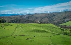 Campo con las ovejas Paisaje con las colinas y las monta?as Área de Nelson, Nueva Zelanda imagen de archivo libre de regalías
