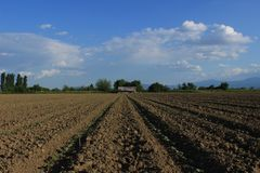 Campo con las plantas de algodón Crecimiento del comienzo de las plantas de algodón apenas imágenes de archivo libres de regalías