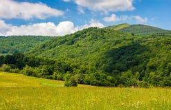 Campo con le erbe selvagge nel paesaggio della montagna di estate Fotografia Stock Libera da Diritti