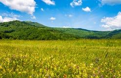 Campo con le erbe selvagge nel paesaggio della montagna di estate Immagine Stock Libera da Diritti