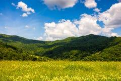 Campo con le erbe selvagge nel paesaggio della montagna di estate Fotografia Stock