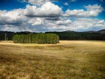 Campo con le nuvole Fotografia Stock