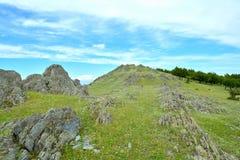 Campo con le rocce e di olivo Immagini Stock Libere da Diritti