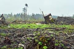 Campo con los árboles derribados Fotografía de archivo