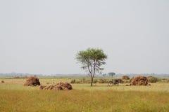 Campo con los haystacks Fotografía de archivo libre de regalías