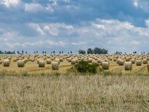 Campo con muchos rollos del grano Imagen de archivo libre de regalías