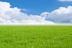 Campo con un'erba verde Fotografia Stock