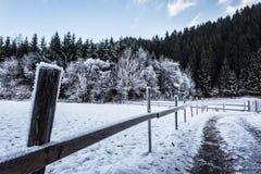 Campo congelado Foto de Stock