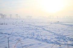 Campo congelado na manhã Imagem de Stock Royalty Free